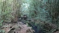 Noticias Cultura y Vida Sana Diario Puerto Varas Camino Ancestral Huilliche