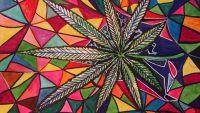 Cannabis Medicinal, Marihuana, Diario Puerto Varas, Cultura y Vida Sana