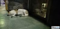 Diario Puerto Varas Entrevista con perro de la calle