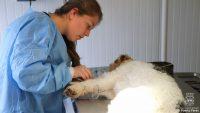 Diario Puerto Varas Noticias Actualidad Operativos Veterinarios Tenencia Responsable de Mascotas