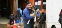 Diario Puerto Varas Noticias Actualidad Esterilización de Mascotas Tenencia Responsable