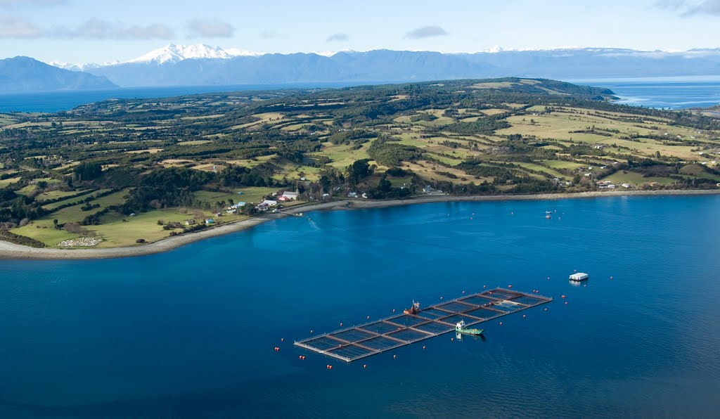 Diario Puerto Varas Fuga de salmones en Isla Huar