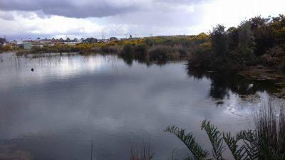 Diario Puerto Varas: Humedal Llánten previa intervención de GPR