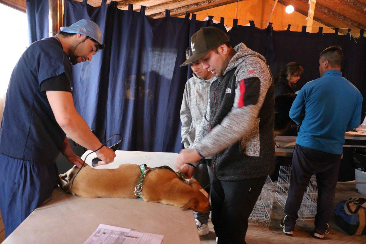 Diario Puerto Varas Esterilización de mascotas Puerto Varas