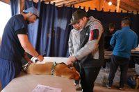Próximos Operativos de Esterilización de Mascotas en Puerto Varas - Diario Puerto Varas