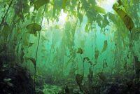 Bosque de Huiro - Diario Puerto Varas
