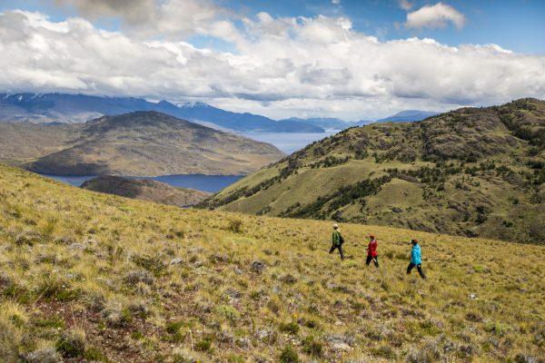 Parque Nacional Patagonia Tompkins Conservation - Diario Puerto Varas