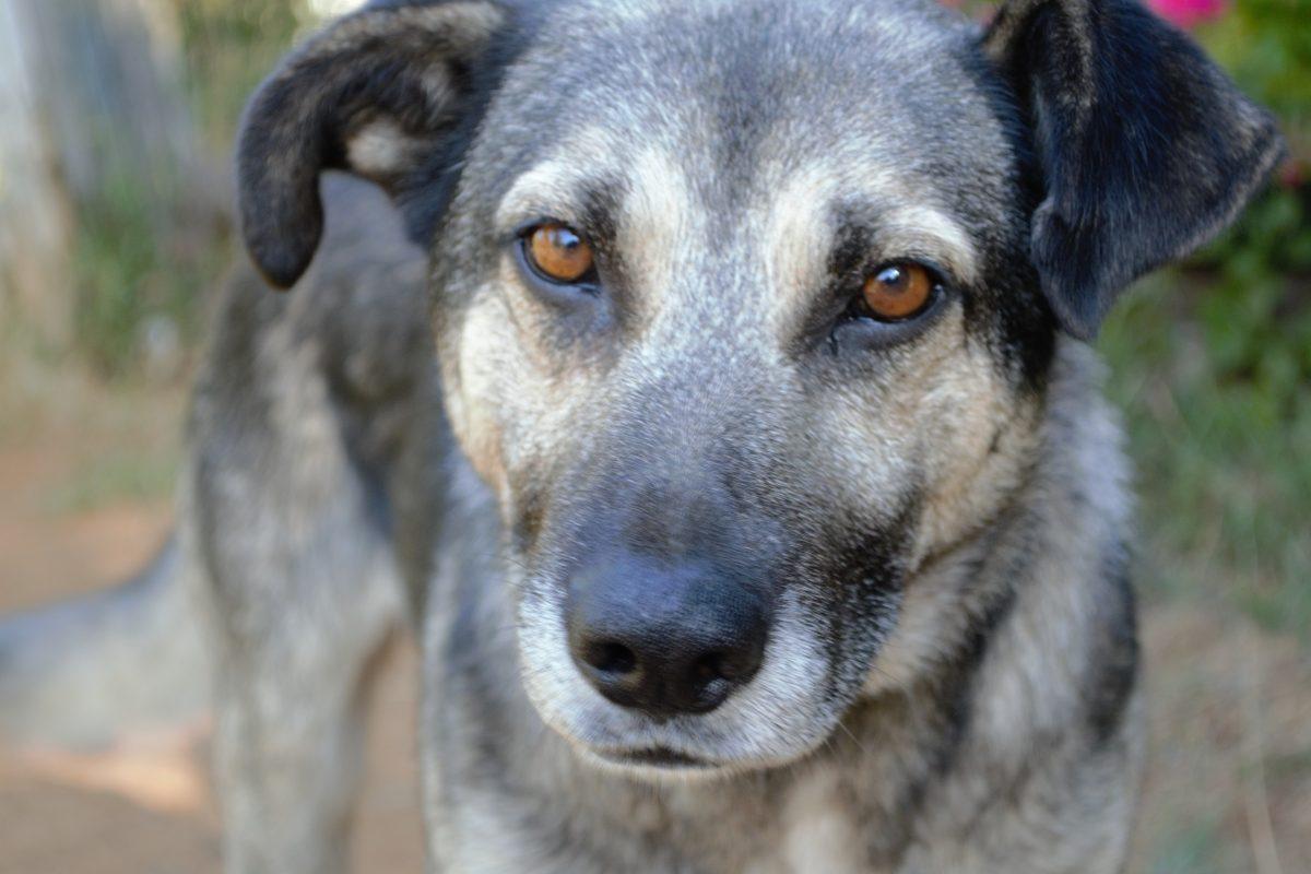 Puerto Montt: Operativos para implantar microship en perros y gatos - Diario Puerto Varas