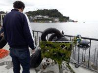 Limpieza a fondo del lago Llanquihue - Diario Puerto Varas