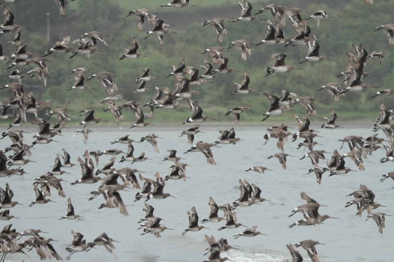 Aves, ayudando a su conservación - Diario Puerto Varas
