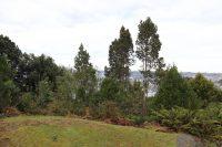 Trabajos de paisajismo en cerro Philippi - Diario Puerto Varas