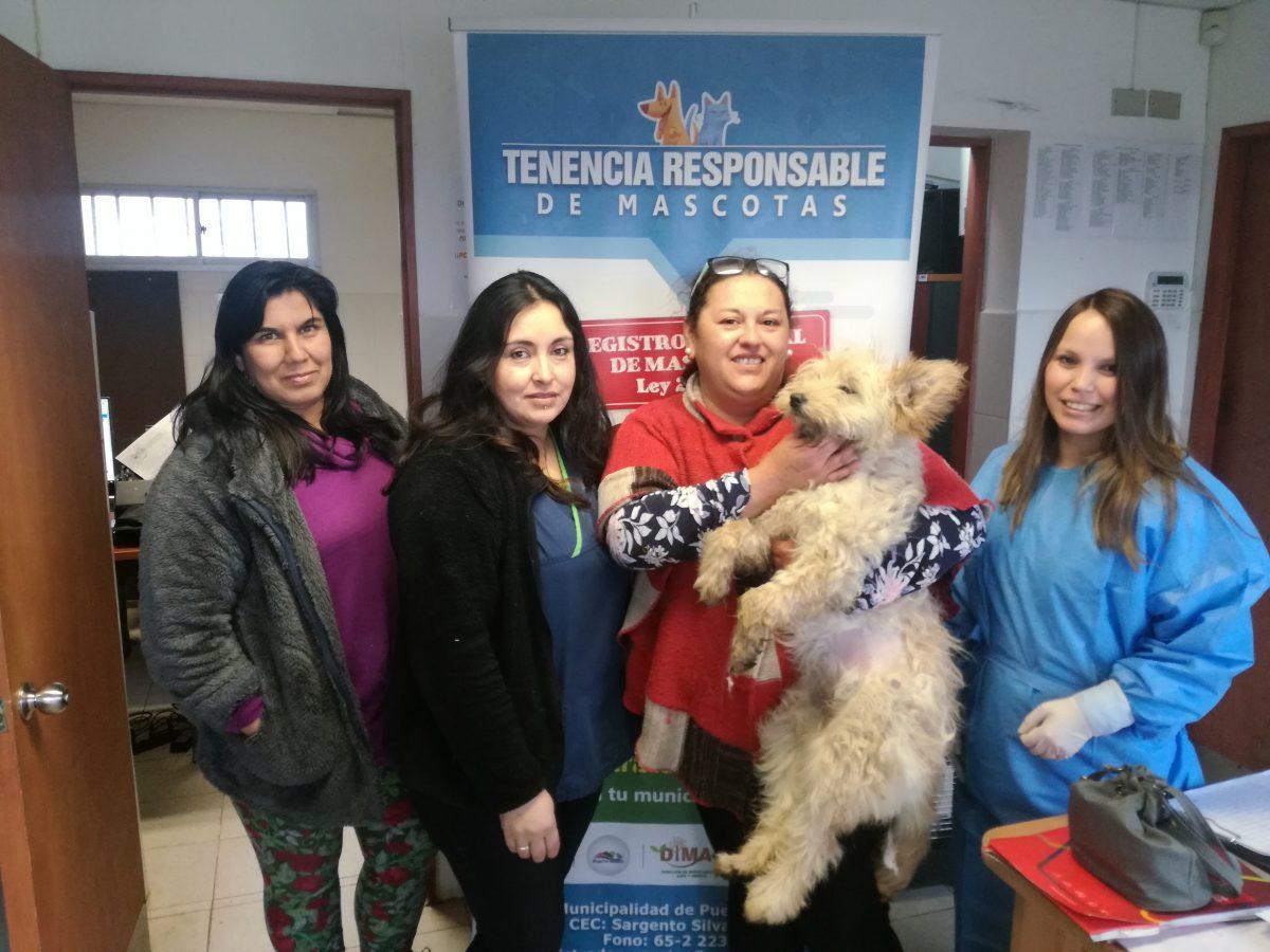 20 mil esterilizaciones de mascotas efectuadas en Puerto Montt -Diario Puerto Varas
