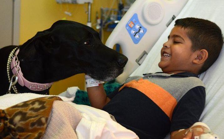 Terapia Canina para tratamiento de niños en Puerto Montt - Diario Puerto Varas