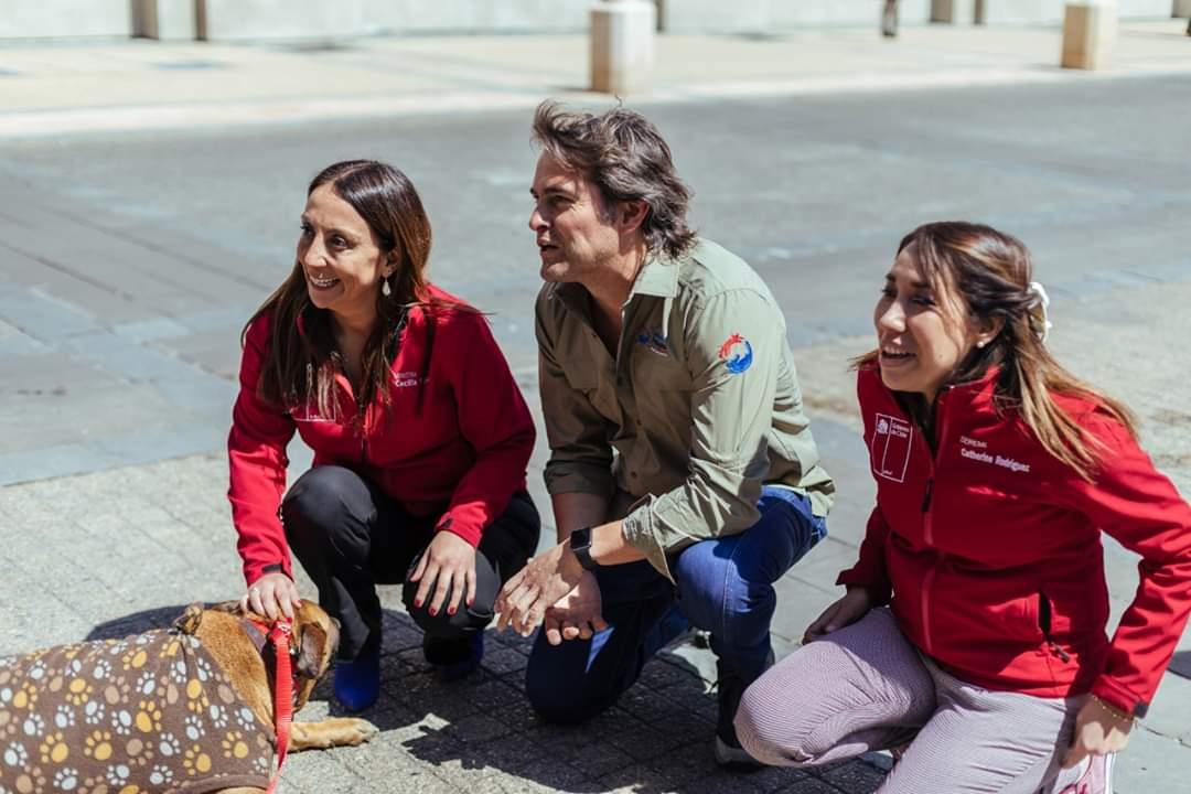 Gobierno llama a fomentar la Tenencia Responsable y el Cuidado de Mascotas - Diario Puerto Varas