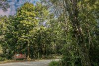 Parque Alerce Andino - Diario Puerto Varas