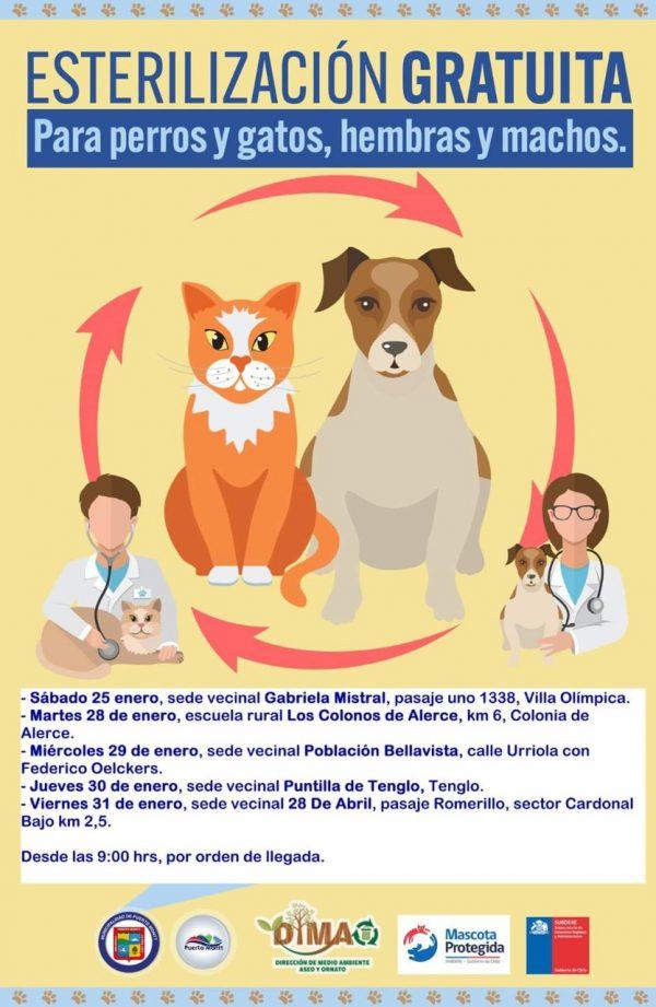Jornadas de esterilización para perros y gatos 2020 en Puerto Montt - Diario Puerto Varas