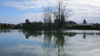 Humedal - Diario Puerto Varas